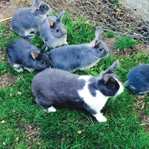 Pets Corner rabbits